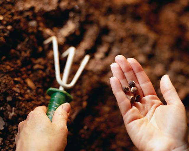 planting seed trowel hands seeds Focus on the Seeds that You Plant